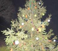Obrázek stromek3.jpg